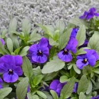 Bildcredits: Dorisworld.at   Blumen