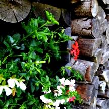Bildcredits: Dorisworld.at   Holz und Blumen Austria