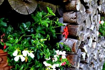Bildcredits: Dorisworld.at | Holz und Blumen Austria