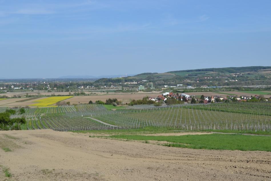 Bildcredits: DorisWorld - ein Blick auf die Weinfelder im Traisental