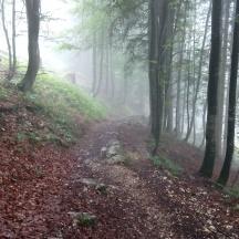 Bildcredits: Dorisworld.at   Im Wald
