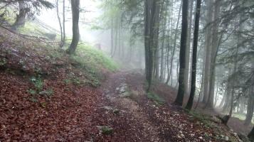 Bildcredits: Dorisworld.at | Im Wald