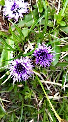 Bildcredits: Dorisworld.at | Herz-Alm-Pflanzen