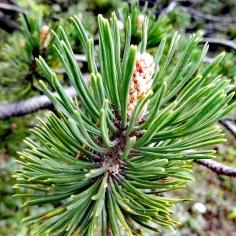 Bildcredits: Dorisworld.at | Pflanzen auf Tauplitz