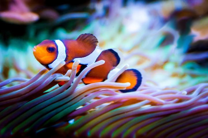 fish-959636_1920