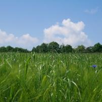 Bildcredits: Dorisworld.at   Pesenbach Blumenwiese mit blauen Himmel