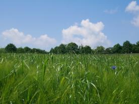 Bildcredits: Dorisworld.at | Pesenbach Blumenwiese mit blauen Himmel