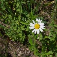 Bildcredits: Dorisworld.at   Blumen in der Wiese