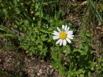 Bildcredits: Dorisworld.at | Blumen in der Wiese