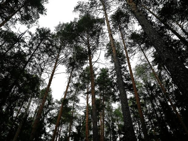 Bildcredits: Dorisworld.at | Viele Bäume im Nationalpark
