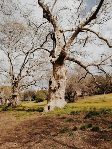 Bildcredits: Dorisworld.at | Baum Park Rom
