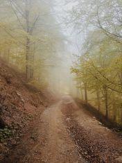 Bildcredits: Dorisworld.at   Ligurien, Melogno Pass im Wald