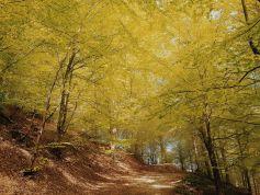 Bildcredits: Dorisworld.at | Ligurien, Melogno Pass im Wald es lichtet sich