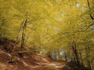 Bildcredits: Dorisworld.at   Ligurien, Melogno Pass im Wald es lichtet sich