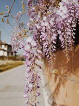 Bildcredits: Dorisworld.at | Piemont bei Alba Flieder