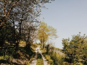 Bildcredits: Dorisworld.at | Piemont Weinberg-Haselnusswege