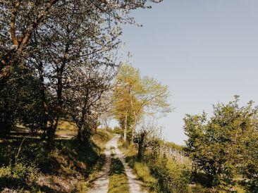 Bildcredits: Dorisworld.at   Piemont Weinberg-Haselnusswege
