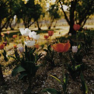 Bildcredits: Dorisworld.at | Blumen in Monforte