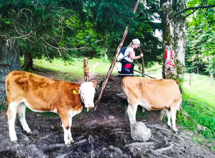 Eurohike Almwandern im Salzkammergut: MeineErfahrung